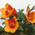 Den. cuthbertsonii red&orange