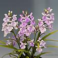 白紫宝セルフ